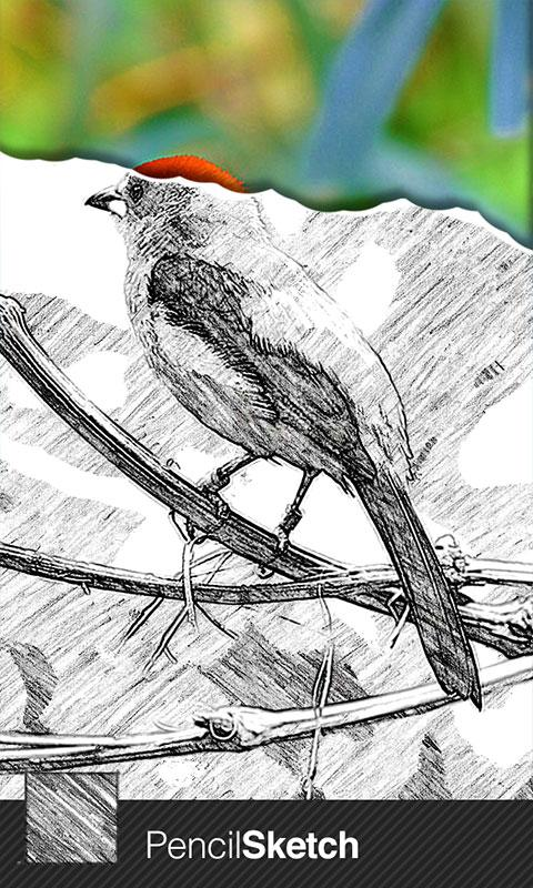 SketchGuru screenshot